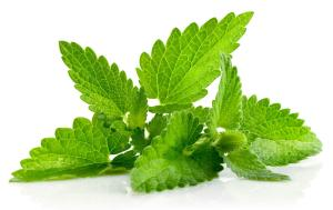 Natural Home Remedy Using Mint Leaves